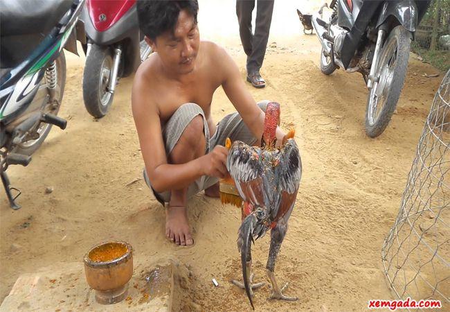 cách vào nghệ cho gà chọi, cách làm cho gà chọi đỏ đẹp, vào nghệ cho gà chọi