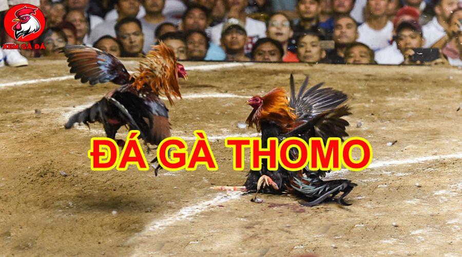 Đá gà thomo