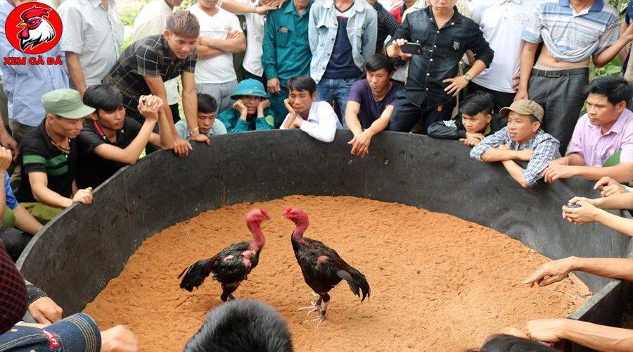 Hội gà chọi Hà Nội
