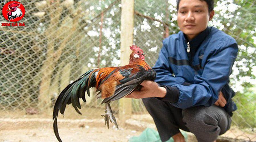 Mô hình nuôi gà rừng